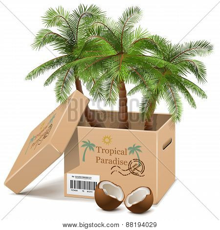 Vector Palm Tree In Box
