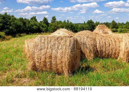 Straw Bales On Farmland In Summer Sunny Day