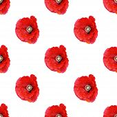 foto of corn  - Beautiful red poppy Papaver rhoeas spring flowers seamless pattern on white background - JPG