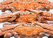 pic of crab  - Hot Steamed Crabs Close up on top view mode - JPG