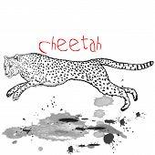 stock photo of cheetah  - Cheetah  Africa Animal Jump With Ink Spots - JPG