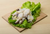 image of cuttlefish  - Raw cuttlefish with herbs on the wood background - JPG