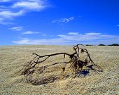 picture of windswept  - Golden sand isolated windswept beach in Australia - JPG