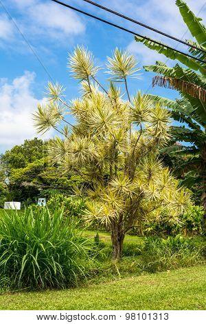 Plants in Maui, Hawaii