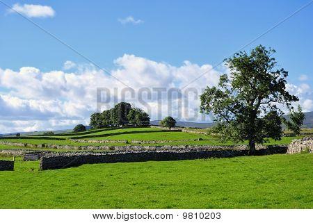 Summer Fields & Drystone Walls Near Shap
