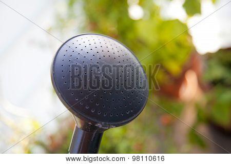 Watering Can Sprinkler Head