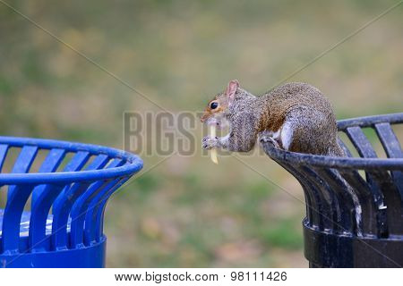 Squirrel in trash can