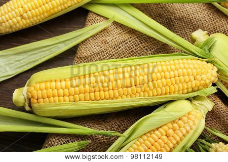 Fresh corn on cobs on sackcloth, closeup