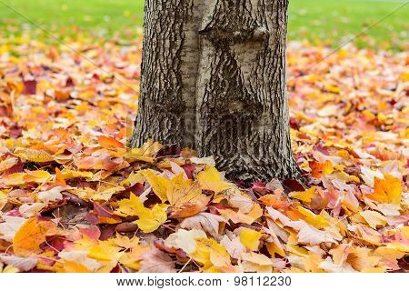 Fallen leaves around a tree trunk
