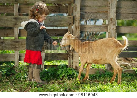 little girl feeding goat in the garden