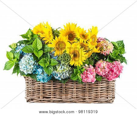 Sunflowers And Hortensia Blossoms. Summer Flowers In Basket