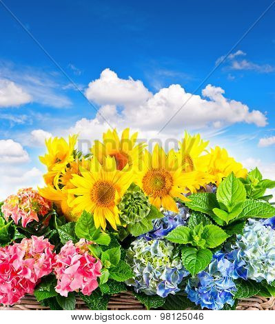Sunflowers And Hortensia Blossoms. Summer Flowers