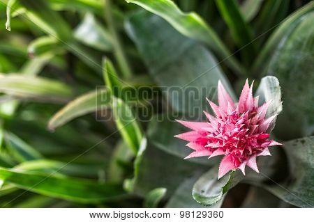 Plant From Jungle. Amazonia, Ecuador