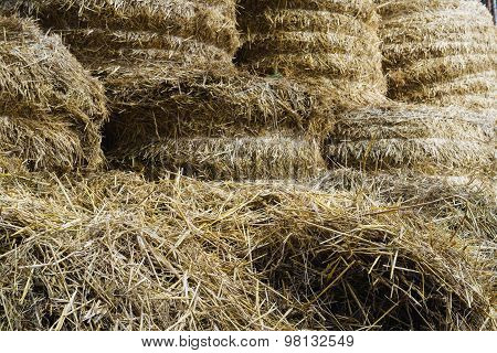 Hay And Straw Procured For Cattle