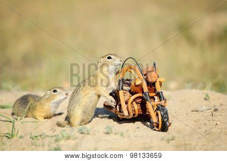 European Squirrels Sniffing Around Wooden Bike