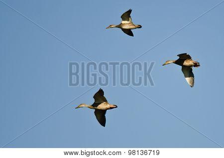 Three Mallard Ducks Flying In A Blue Sky