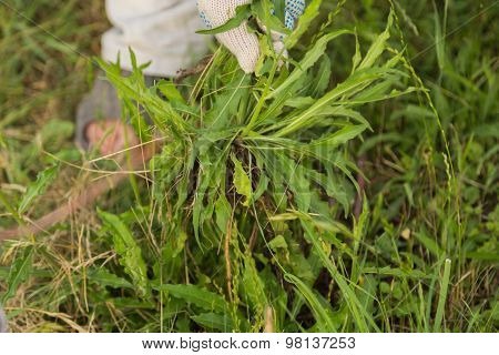 Growing of vegetables, horticultural concerns. cleaning weed.