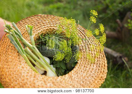 Growing of vegetables, horticultural concerns. fresh vegetables.