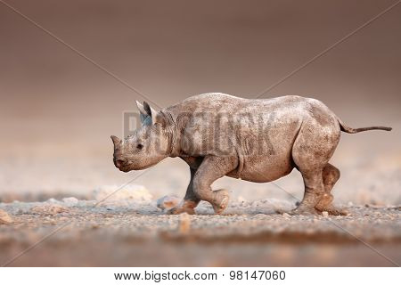 Baby Black Rhinoceros running over salty desert plains of Etosha