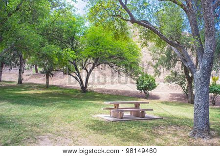 Park Trees Above Picnic Table