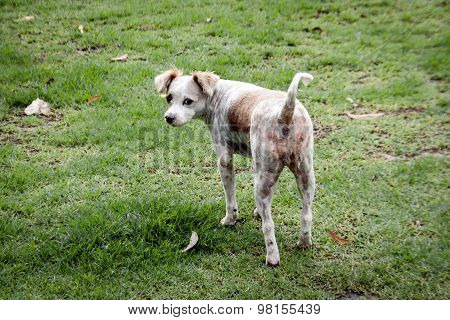 Stray Dog On The Green Grass