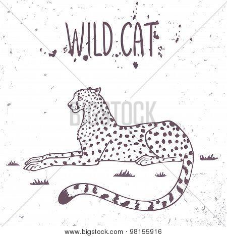 cheetah wild cat