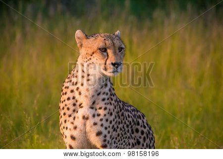South Africa - Sabi Sand Game Reserve