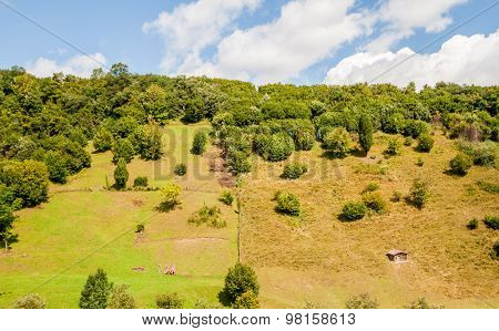 mountain with forest and small shelter