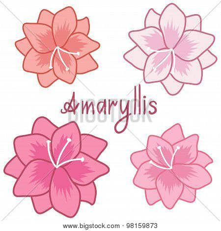 Cute amaryllis set, colorful hippeastrum collection