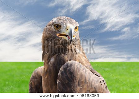 Golden Eagle Strong Raptor Bird Against Cloudy Sky And Grass