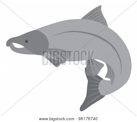 Coho Salmon Grayscale Vector Illustration
