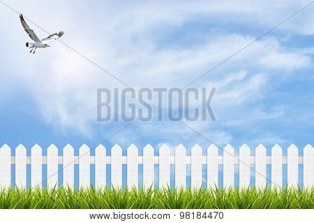Grass And Fence Under Blue Sky, Clouds And Bird