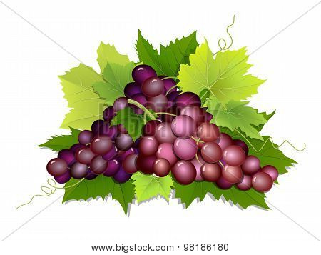 Plucked Bunch Of Grapes