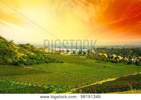 view to vineyard in Serbia
