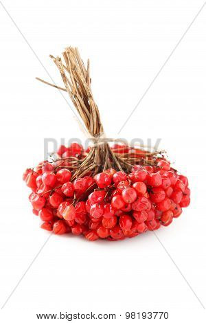 Bunch Of Viburnum Isolated On White