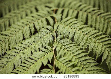 Natural green fern leaf background