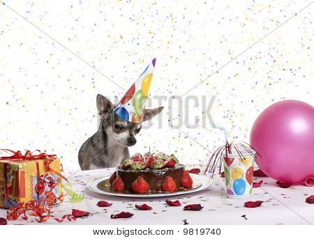 Chihuahua At Table Wearing Birthday Hat And Looking At Birthday Cake In Front Of White Background