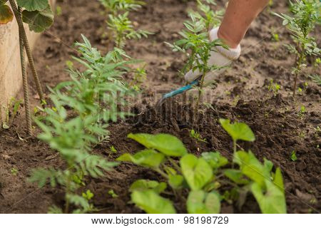 Cultivation of plants courtship