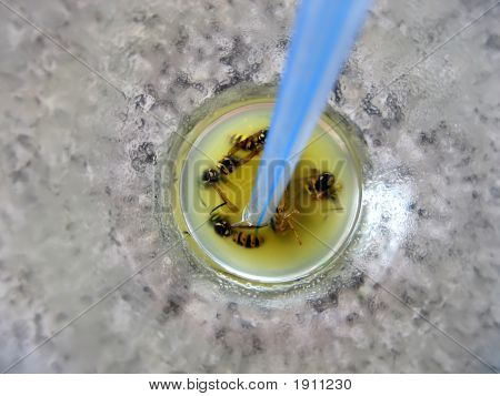 Cemetery Of Wasps In A Cocktail With Orange Juice