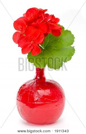 Geranium In Blood