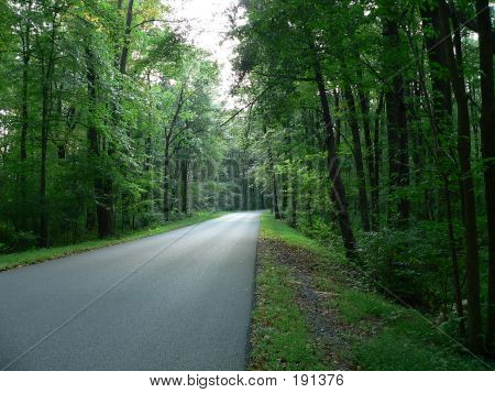 Scenery  Vanishing Road