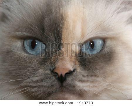 Sight Of A Cat