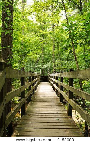 Trial path with wooden bridge in the woods