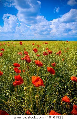 Fantastic landscape: beautiful field with numerous poppies