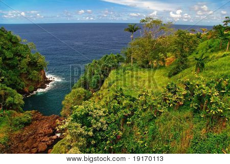 Nice view on the jungle and ocean. Big island. Hawaii