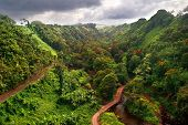 Hawaiian Jungle. Big island. USA