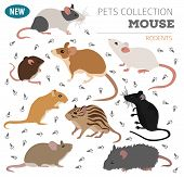 Pets_rodents_rat_4 poster