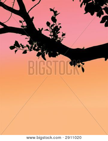 Sunset Tree Sillhoette