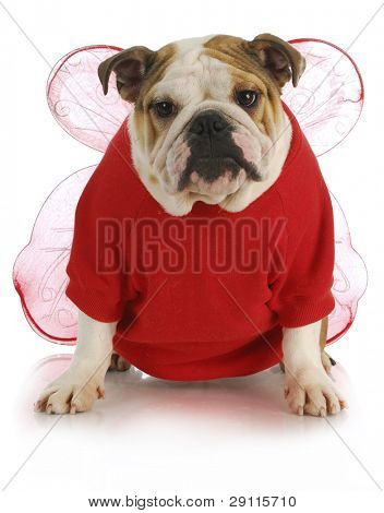 good dog - english bulldog dressed up like an angel