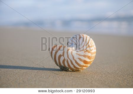 nautilus shell on beach  and blue  sea, shallow dof